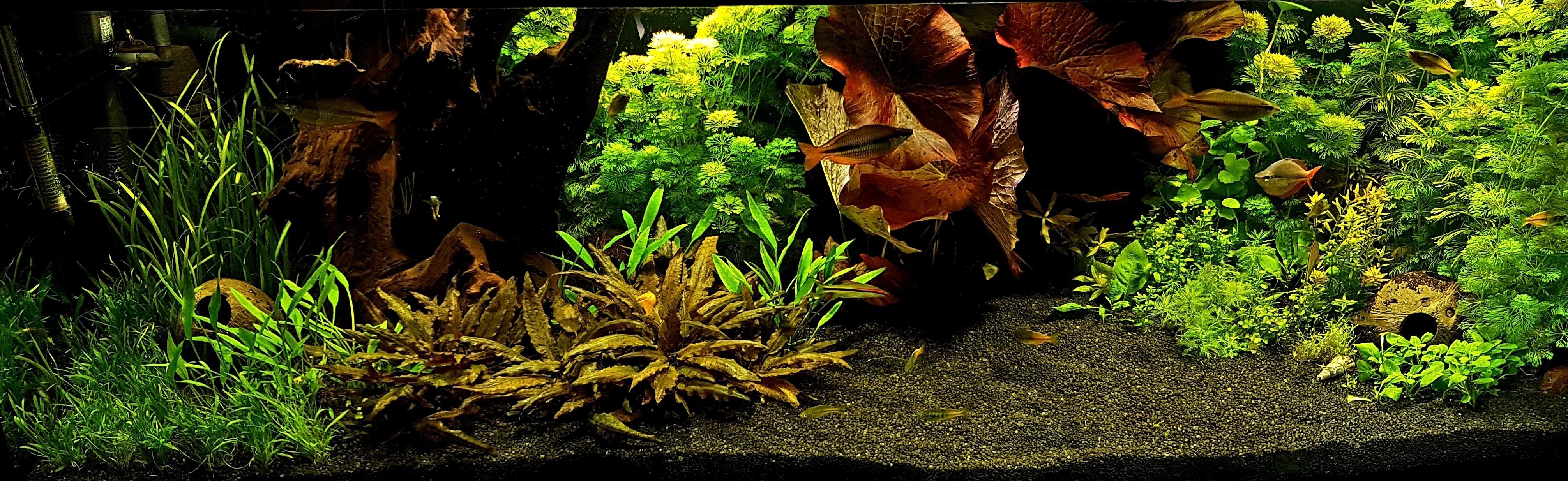 Akwarium roślinne 375 litrów