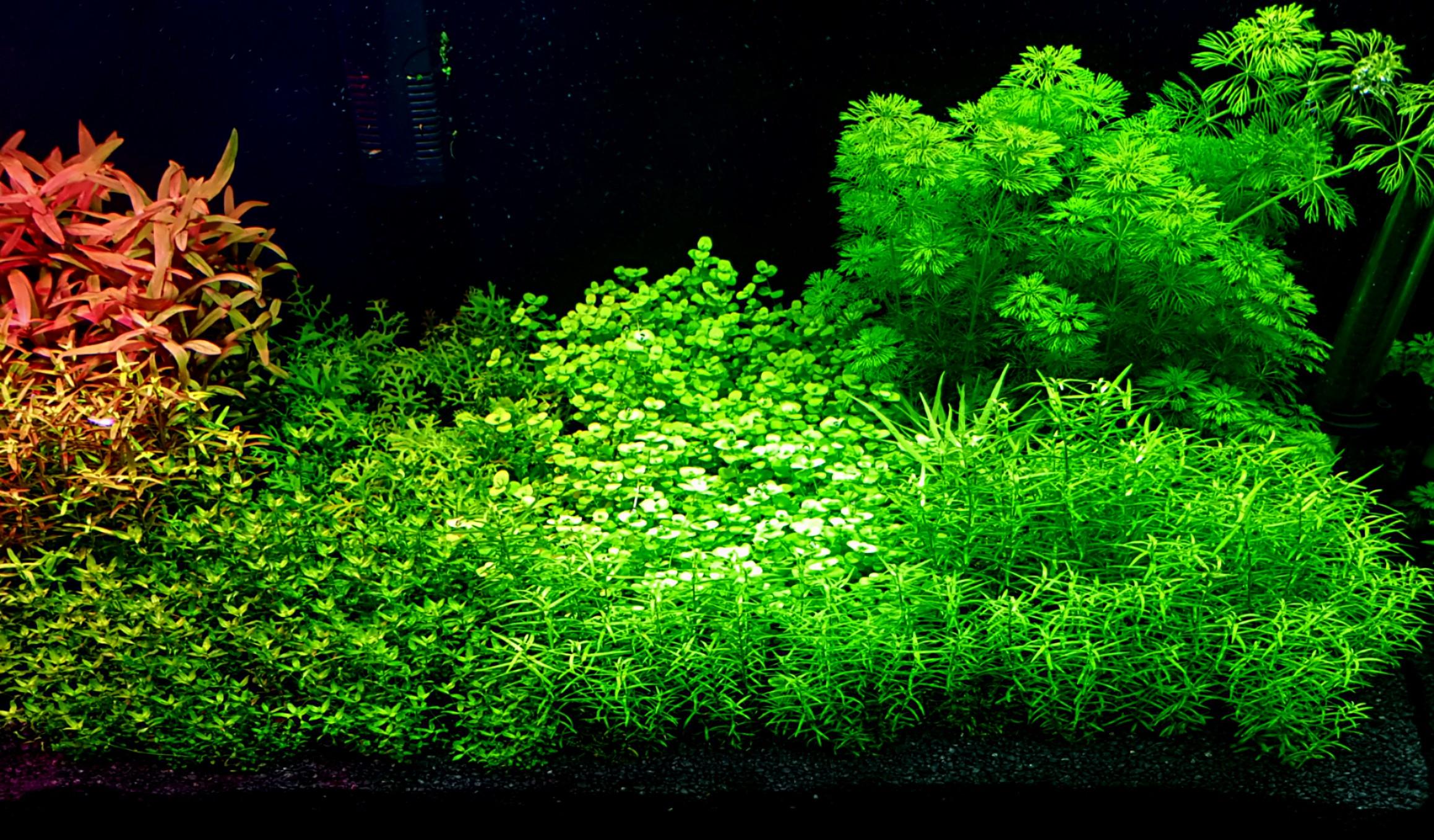 rośliny szybko rosnące